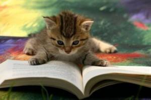 Cat-CatReadingBook03